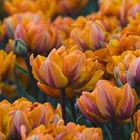 Весна пленяет красотой... :: Наташа (tasha7) Хомутецкая