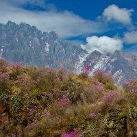 Разноцветные горы :: Ольга Сажина