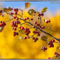 Осень :: Леонид
