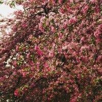 Весна :: Татьяна Калягина