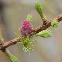 Весна :: sarachai