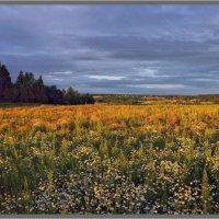 Ромашковое поле :: Vadim WadimS67