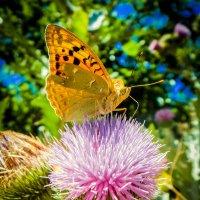 бабочка :: Инна Ефименко