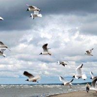 штормовой ветер :: Natali