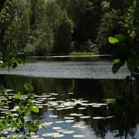 На берегу озера. :: Владимир Гилясев