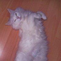 Снежная королева :: Tarka