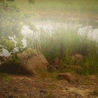 Пруд в тумане :: Григорий Кучушев