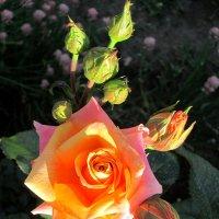 Утренняя звезда... :: Тамара (st.tamara)