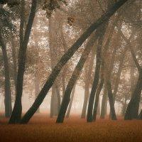 Туман... :: Алена Николаева