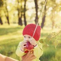 Это моё яблоко! :: Мария Дергунова