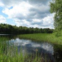 Озеро Среднее. Цель нашего визита. :: Владимир Гилясев