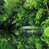 Река... :: Юрий Стародубцев