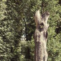 Сухое дерево в парке :: Сергей Филимончук