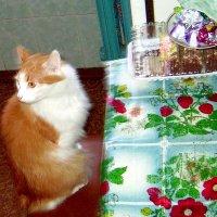 Закормили меня сладостями, видеть их больше не могу :: Tarka