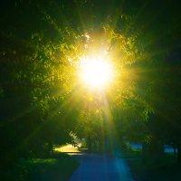 В лучах заката 4 (июль 2014) :: Алексей Макеев