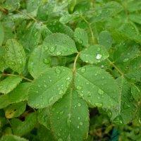 мокрая зелень) :: Oxi --
