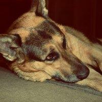 Мой собака :: Даша Ткачук