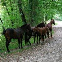 Табун лошадей в горах Кавказа :: Олег Романенко