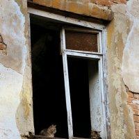 у окна... :: Лариса