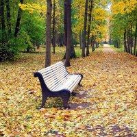 Осенняя аллея. :: Лия ☼