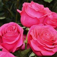 Розовая нежность :: Natal&na Фотолюбитель