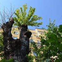 Новая жизнь старого дерева. :: Oleg4618 Шутченко