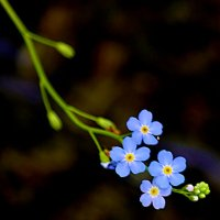 Цветочки над водой. :: Виталий Дарханов