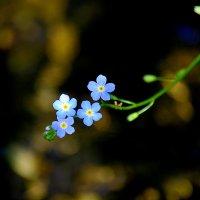 Цветочки над водой 2. :: Виталий Дарханов