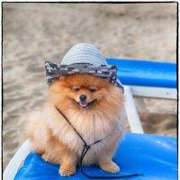 Отнял у папы шляпу и на пляж :: Леонид