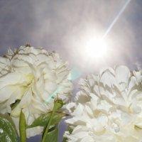 солнце и цветы :: Аркадий О(*_*)О