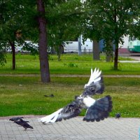 Опоздавший :: Oleg4618 Шутченко