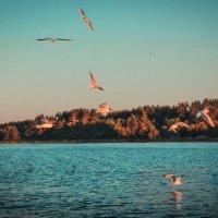 gulls :: Arina Kekshoeva