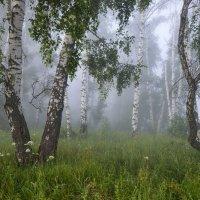 Туман в берёзовой роще :: Любовь Потеряхина