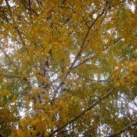 Мне золотистый цвет листвы осеннюю тоску рассеет. :: Tarka