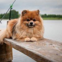 рыбак :: Злата Красовская