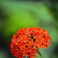 Цветок у дома :: юрий Амосов