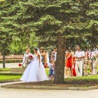 Свадьба, свадьба,свадьба ... :: юрий Амосов