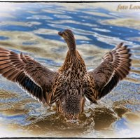 Водные процедуры :: Leo Alex Photographer