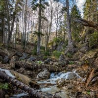 В лесу... :: Александр Хорошилов
