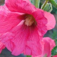 Цветы :: Vladikom