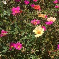 Красивые цветочки :: Sergey Savchenko
