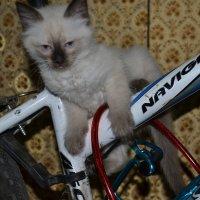в поддержку вело :: Лёля Hrom