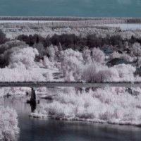 Инфракрасный мир 1 :: Александр Сысоев