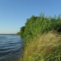 Берег реки :: Анатолий