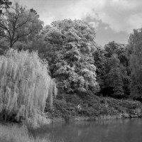 Озеро и разноцветные деревья. :: Андрий Майковский