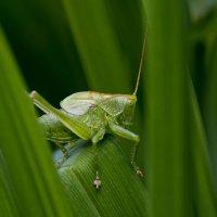 В густых зелёных травах. :: Николай Галкин