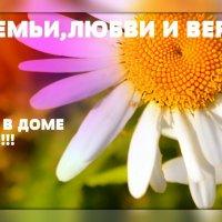 *** :: Евгеша Сафронова