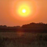 Вечернее солнце :: Тамара