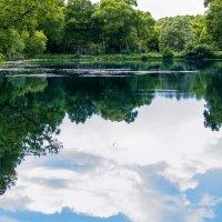 озеро :: Sergey Gorelov