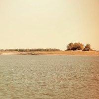 Река Обь :: Ольга Бедарева